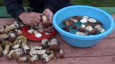 comestível : Man cleaning foraged Boletus edulis mushrooms with knife Vídeos