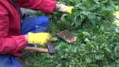 pokrzywa : Gardener chopping nettles with ax for organic fertilizer