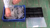 zinco : worker sorting nails in new plastic box