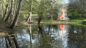 kamp ateşi : Bonfire campfire on lake pond coast in spring time near forest Stok Video
