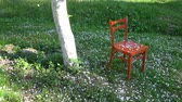 White apple tree petals falling in spring on red orange wooden chair in farm garden Стоковые видеозаписи