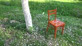 White apple tree petals falling in spring on  orange wooden chair garden, slow motion
