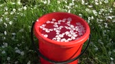 Red plastic bucket in spring garden with white apple tree petals and water Стоковые видеозаписи