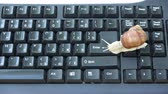 Snail on computer keyboard clipboard crawling on ENTER button