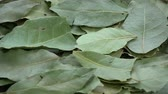 laurel leaves : Rotating laurel leaves food background