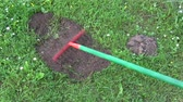 montículo : Removing mole molehills on lawn grass with new colorful rake