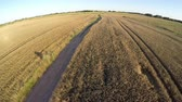 farming machinery : Rural farmland summer end landscape with bad gravel road, aerial view