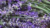 aromaterapia : Rotating fresh beautiful lavender flowers background Vídeos
