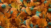 officinalis : Rotating fresh medical herb marigold calendula flowers background
