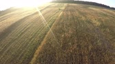 litwa : Summer end farmland wheat fields from drone in beautiful morning, aerial view