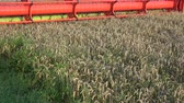 reaping : Combine harvester harvesting wheat in summer end field, machinery detail