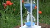 measurement : Hourglass sandglass with blue sand motion  and red orange poppy blossoms in garden Stock Footage