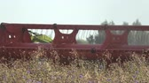 reaping : Combine harvester harvesting wheat in summer end field, machinery fragment Stock Footage