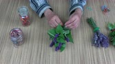 kötés : Senior woman herbalist hands binding fresh anise hyssop Agastache fenicula bunch for dry on table Stock mozgókép