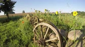 koponya : Morning shadows in summer end and decorative fence with stones, wheels and flowers in farm, time lapse Stock mozgókép