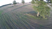 carvalho : Drone fly up over harvested agriculture field with old oaks group in evening, aerial view