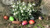 kar taneciği : Easter background, snowdrops in wind and colored eggs group on grass in garden