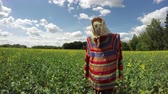 espantapajaros : Decorative lonely scarecrow on rapeseed field in summer, time lapse Archivo de Video