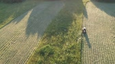 Farm tractor haymaking cut hay grass in evening, aerial 무비클립