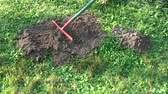 odstranit : Removing fresh molehills on garden lawn grass