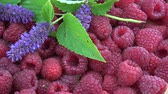 homeopatia : Rotating fresh raspberries and medical anise hyssop Agastache foeniculum flowers background