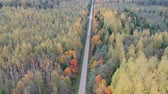 Beautiful autumn forest with gravel road and car, aerial view