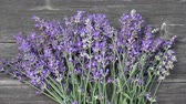 Fresh healthy lavender bunch on old wooden garden table background