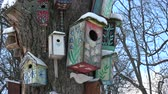 Snowy song birds nesting boxes group on old tree in park