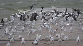 racek : Many sea birds on concrete pier in wind