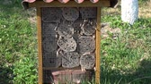 シールド : Insect hotel and many flying wild bees in spring garden