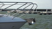 fiocco : Modern new steel yacht bow  in sea port and seagulls Filmati Stock
