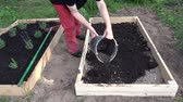 gardener pouring black soil humus to new wooden raised  bed for herbs and flowers
