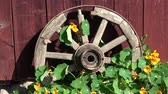 jardinagem : Old horse carriage wheel near farm house and wind in nasturtium flowers