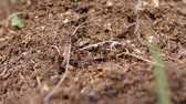 ants in an anthill hurry