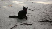 black cat sits on sand beach licks itself and goes away