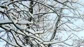 с Новым годом : closeup tree twig covered with snow