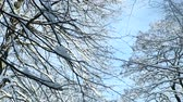 closeup tree tops covered with white snow