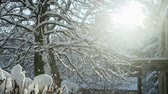winter sun shines through tree covered with snow Stok Video