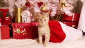 Little cute kitten gets out of the Santa bag with gifts and starts playing with Christmas tree toys Stock Footage