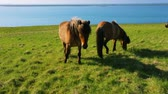 mare : Wild horses on rural pasture land by the blue sea