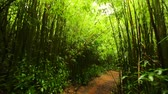 Lush Bamboo Rain Forest. Amazing POV Hiking in Bamboo Forest Smooth Steadicam Shot. Outdoor Healthy Active Lifestyle.