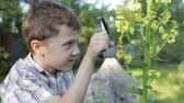 prado : Happy little boy exploring nature with magnifying glass at the day time Vídeos