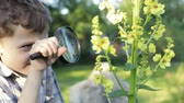 curiosidade : Happy little boy exploring nature with magnifying glass at the day time Stock Footage