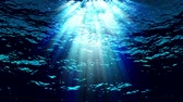 luz solar : Water FX0304: Stock footage of underwater light filtering down through blue water (Loop). Vídeos