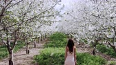vonící : slow motion woman walking through orchard covered in white blossoms