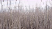 wzrost : tracking shot through tall grass Wideo