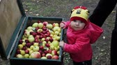 strength : Little baby looking into a suitcase with apples