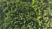 magas : Aerial view camera moves rising up from green forest of dense mixed tree tops