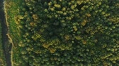 вид сверху : Aerial view camera moves rising up from green forest of dense mixed tree tops