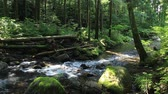wateroppervlak : Clear water River Flow in Scenic Japan Forest